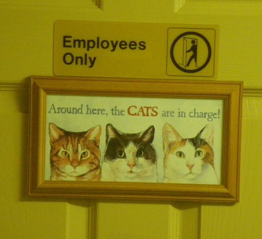 CatEntranceS
